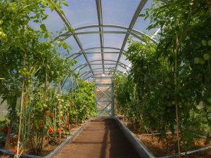 GREENHOUSE OPTIMA 24m²