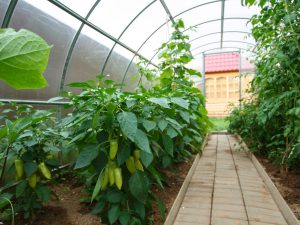 GREENHOUSE ECO 18m²