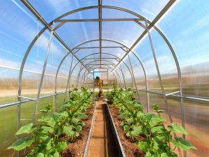 GREENHOUSE TUNNEL 16m²